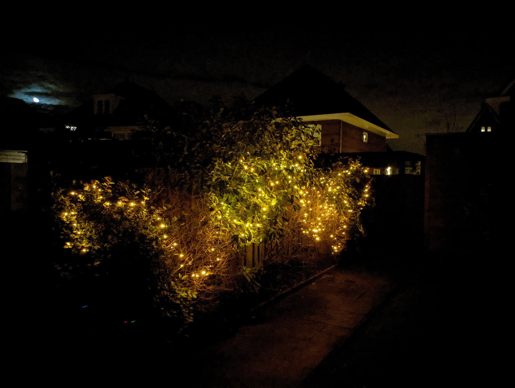 Garden lit up by small LED lights in the plants