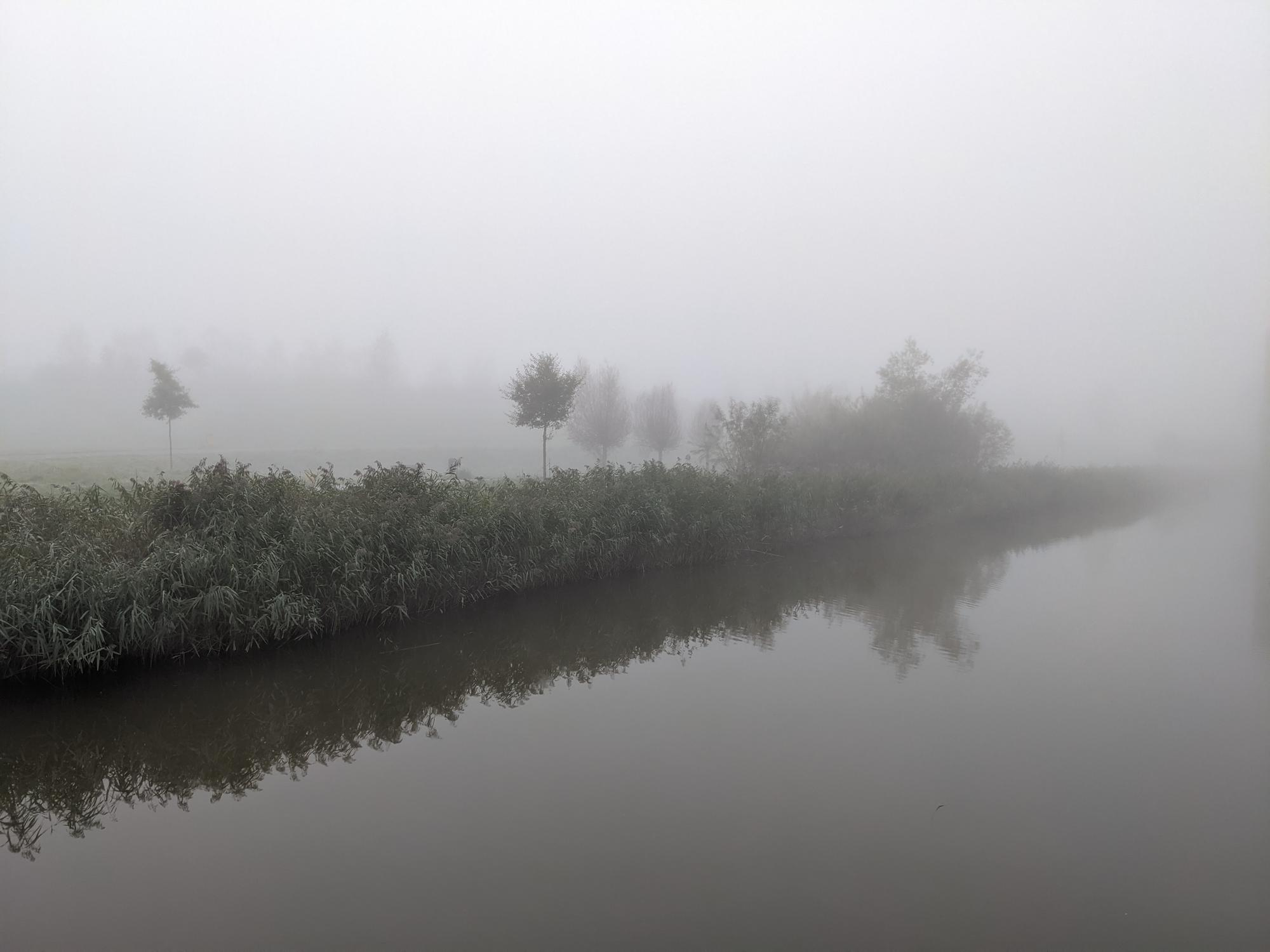 Fog over water with birds and reeds
