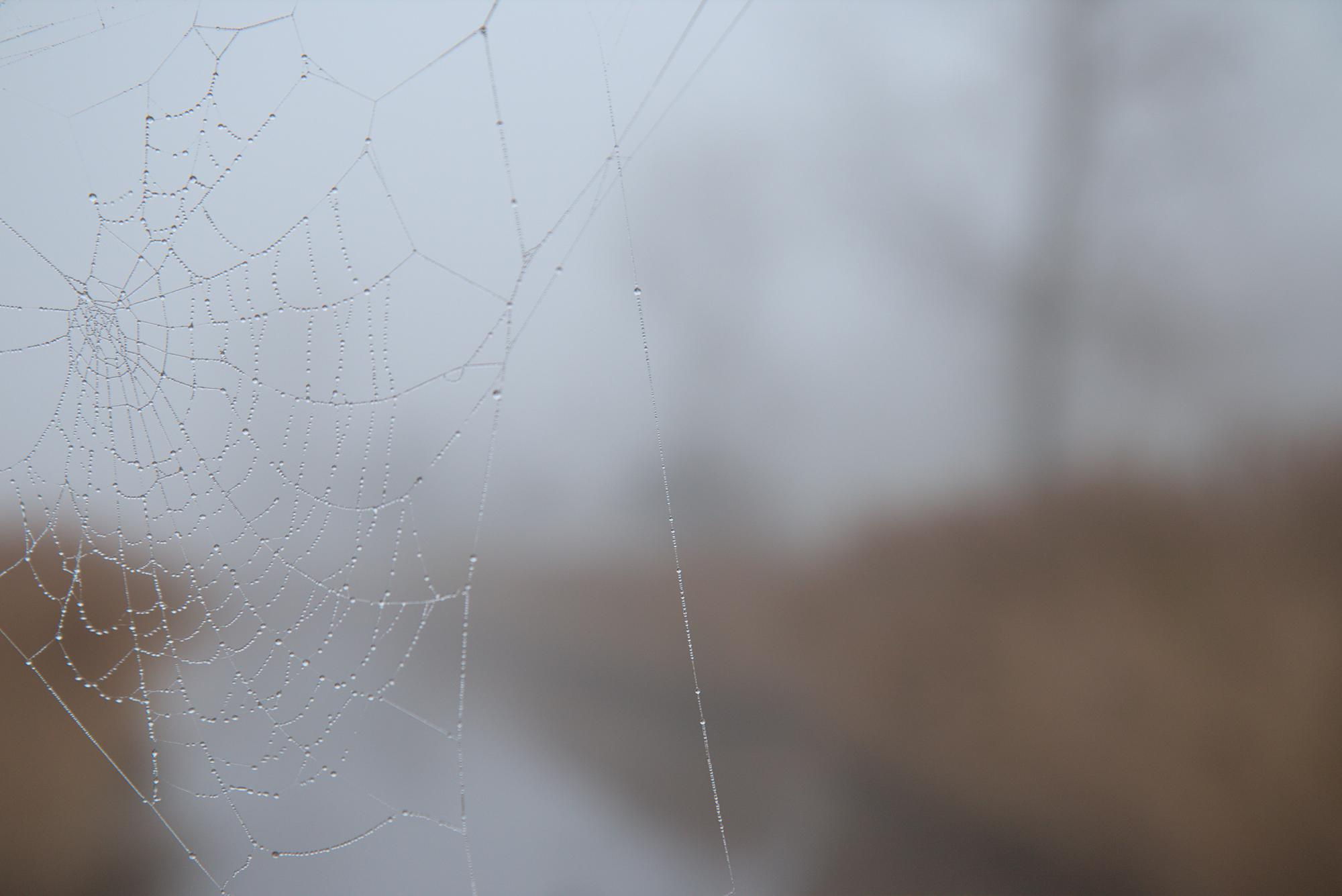 Spiderweb with fog droplets