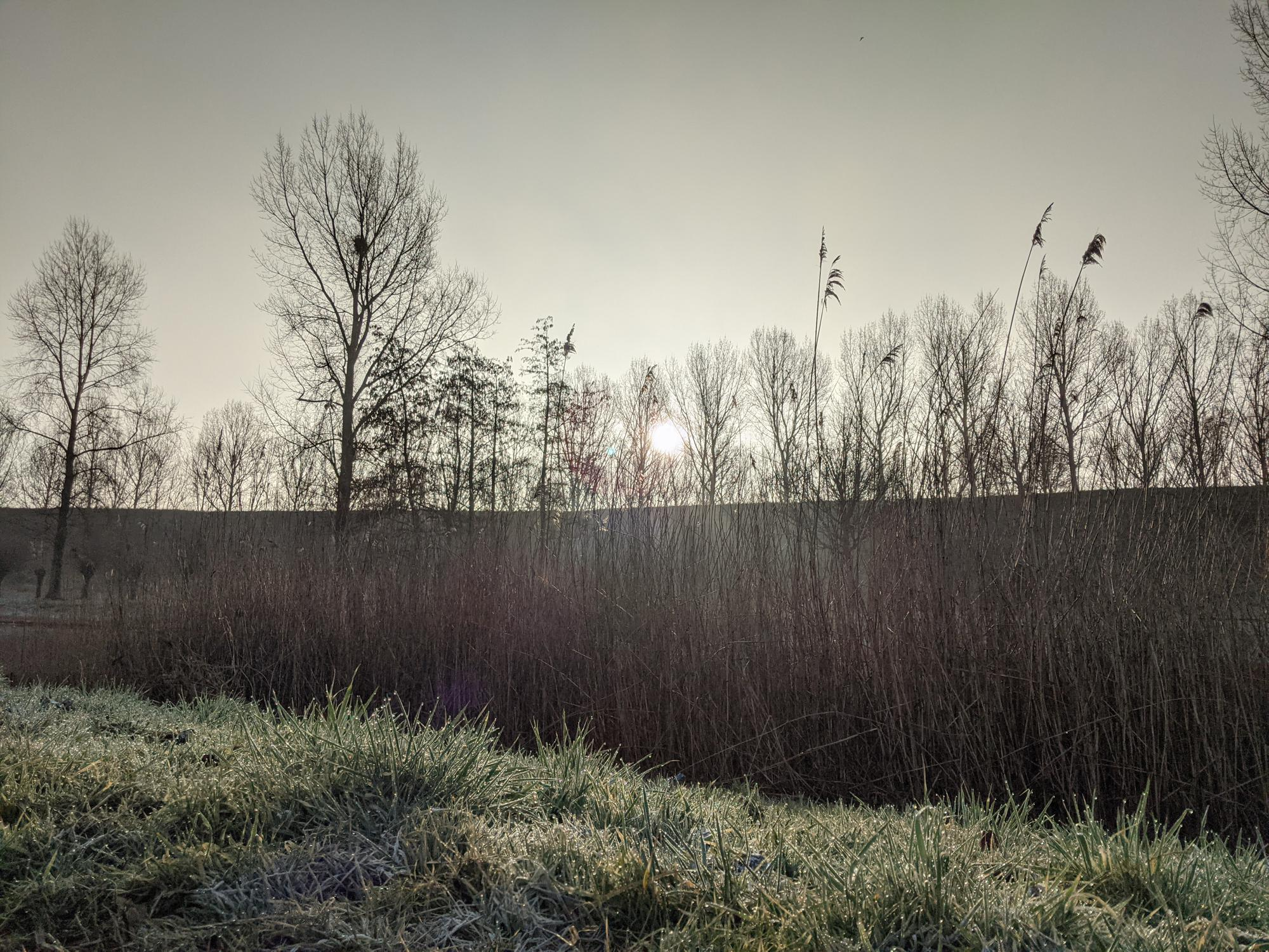 Early sun shining through trees and reeds