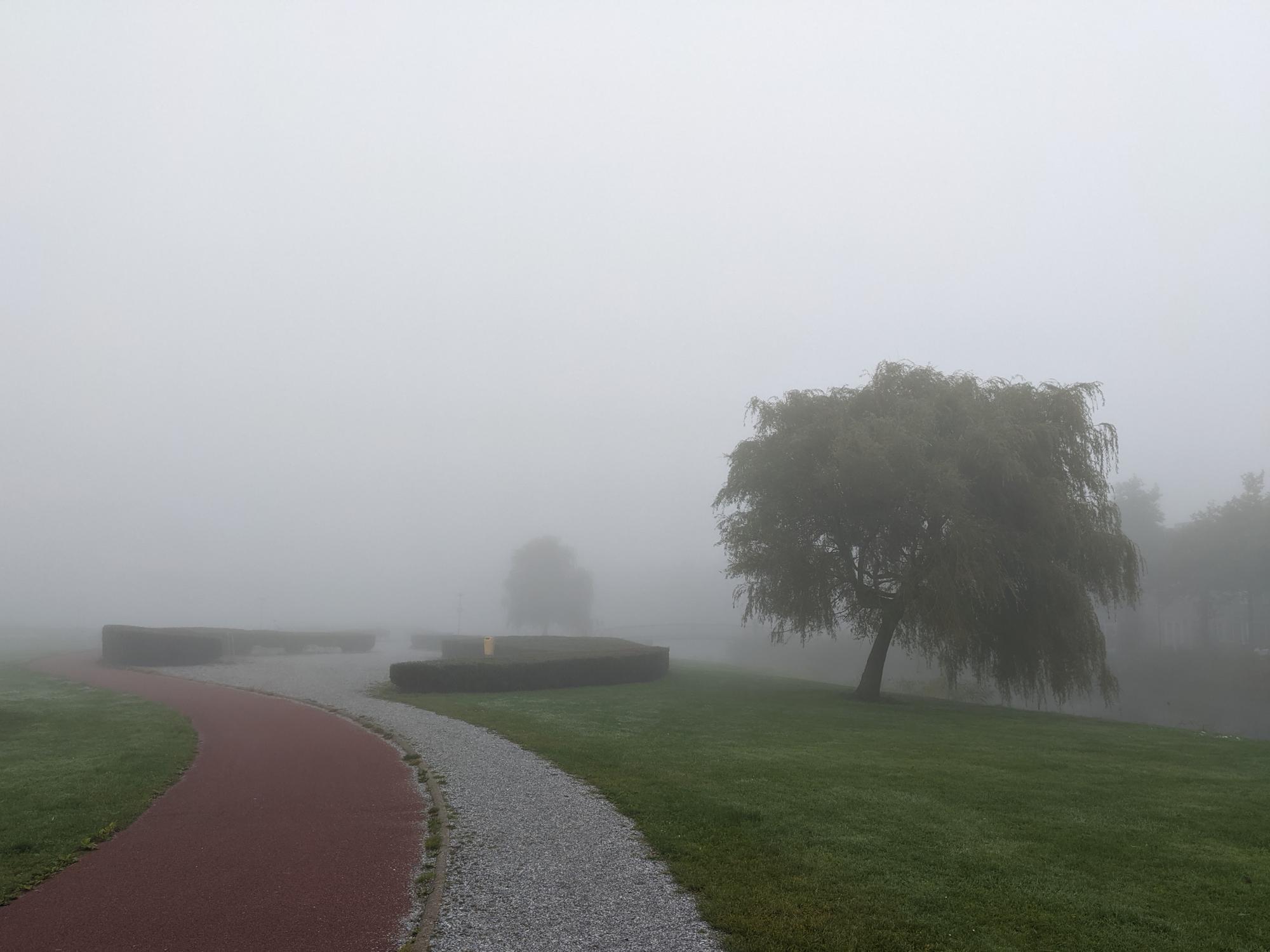 Fog in a park